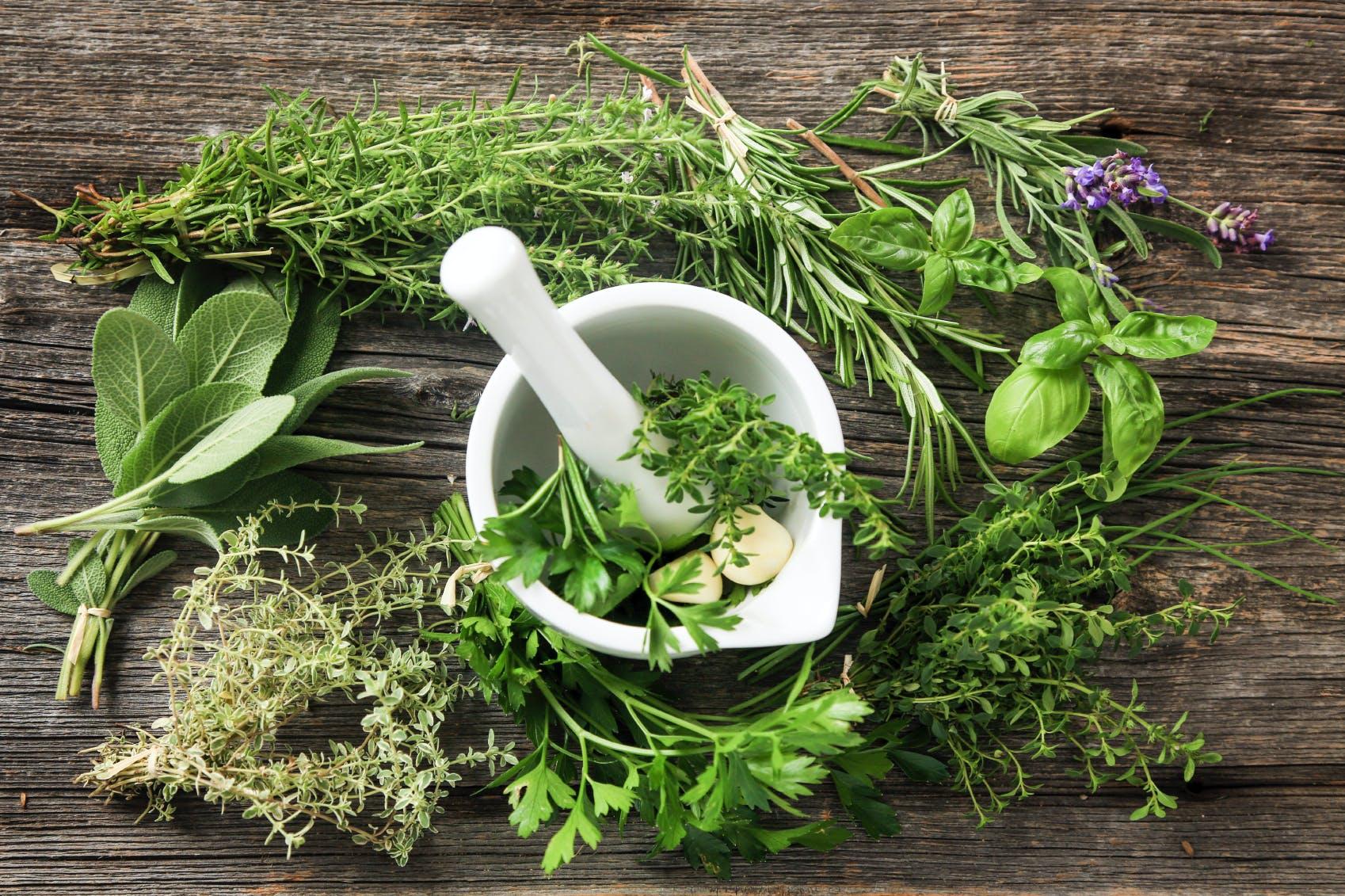 Le basilic et l'aloe vera efficaces contre les démangeaisons cutanées -  Tendances People Mag
